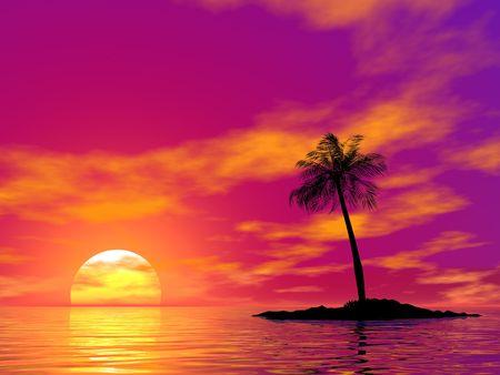 single palm on the uninhabited island on sunset of a sun