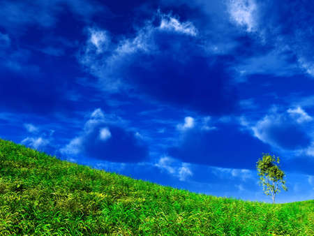 lonely standing tree on the slope of mountain on a background blue sky Stock Photo - 4121330