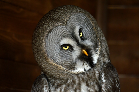 startled: owl under a shelter look at me before the rain is going to start