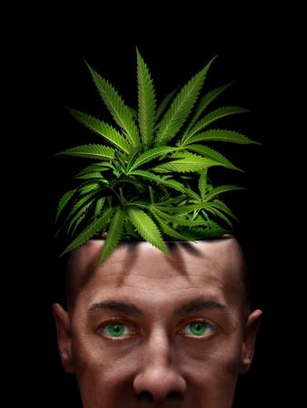 marijuana and cannabis head