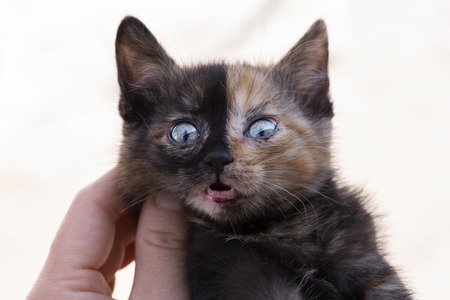 Face of the evil kitten. ?oncept of duplicity, duality.