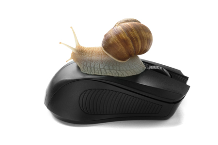 A snail oA snail on computer mouse. Concept speed internetn computer mouse. Concept speed internet slow