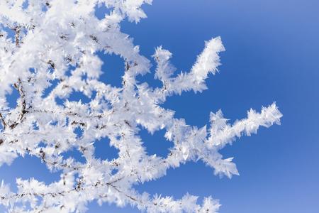 Zweige eines kleinen Strauches in Eiskristallen vor blauem Himmel.