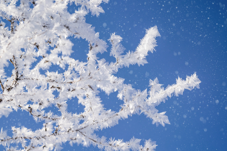 Many branches covered with crystals of ice and snowfall.