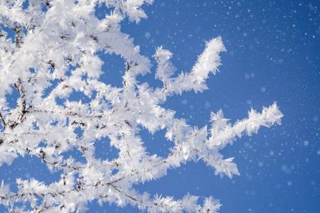 Viele Zweige bedeckt mit Eiskristallen und Schneefall.