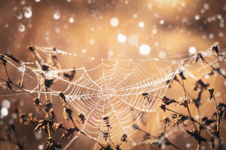Spider web with dewdrops on dry grass in a cold autumn morning. Imagens
