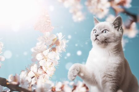 Cute playful cat watches a butterfly sitting on apricot blossom flowers: springtime concept and spring background. Stock fotó