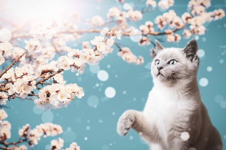 Branches of blossoming apricots and a playful cute kitty on a background of bright sky and sun. Stock fotó