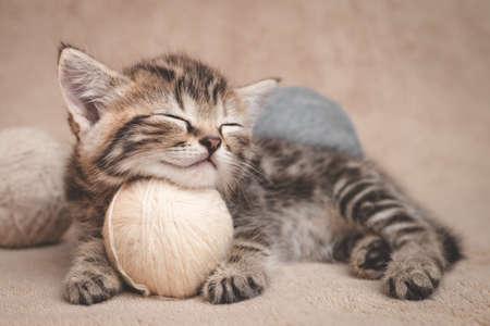 Kitten sleeps resting her head on a ball of yarn.