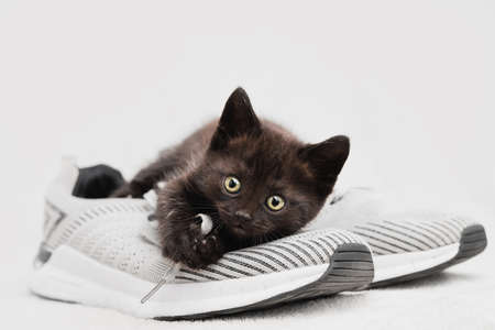 Portrait of a dark-colored kitten sitting on a shoe look into the camera.