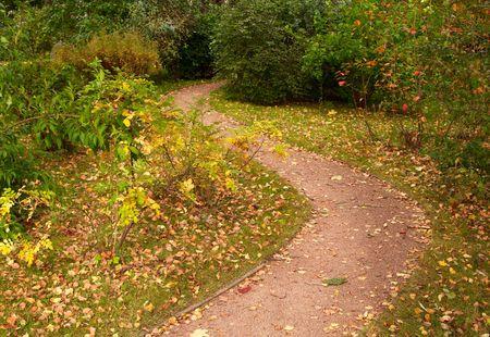 autumnn: Meandering path in the park in Autumnn