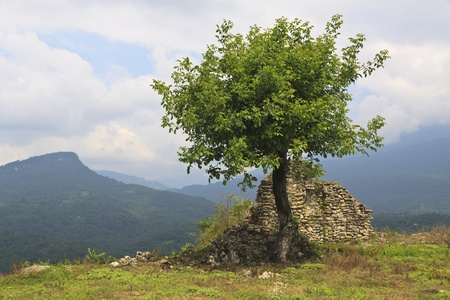 mountin: Lonely tree and ruins on mountin Stock Photo