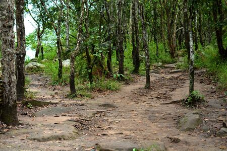 sylvan: Sylvan way in the jungle