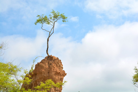 soil erosion: Tree on soil erosion pillar at Sao Din Na Noi in Nan province, Thailand Stock Photo