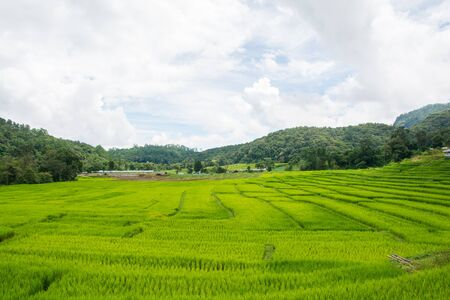 Green rice field with mountain background at mae klang luang Chiang Mai, Thailand