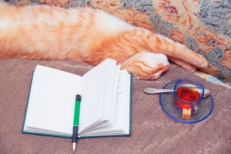 Funny cat is sleeping. Notepad, cup with tea. The concept of rest, relaxation, comfort.