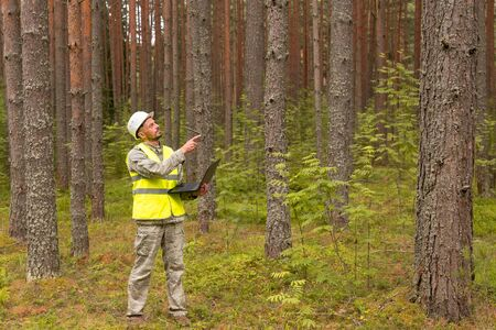 A forest engineer works in the forest with a computer. A man in a white helmet holds in his hands a computer. Forest industry and digital technology. Stock Photo