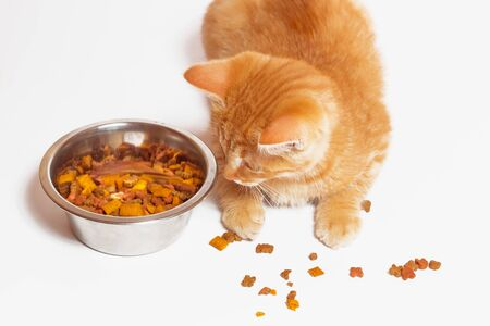 Red cat eats cat food. White background, a bowl of food. Imagens