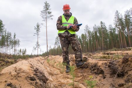 Forest engineer checks the planted trees. environmentalist monitors the development of seedlings. The concept of planting trees in the place of a sawn forest. Stock Photo