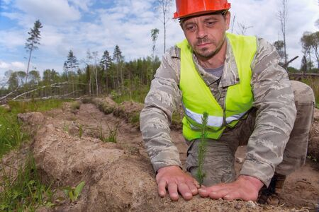 Forester in working uniform. Forest worker plants seedlings of trees. Close-up photo. Real people work. The concept of reforestation after deforestation. 免版税图像