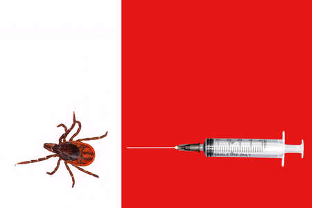 A closeup of a tick on a white background. Syringe on tap background.