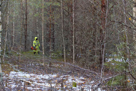 Forest worker doing forest maintenance. The forester works as a brush cutter. Forestry concept. real people work.