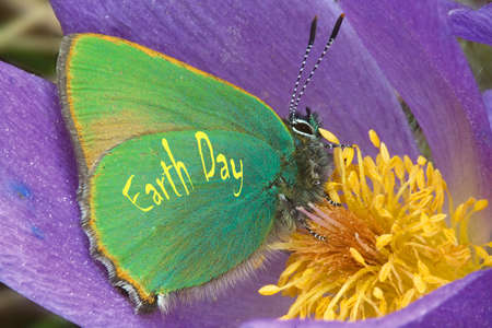 "A beautiful bean with green wings sits on a blue flower. Closeup. Caption on the photo: ""Earth Day""."