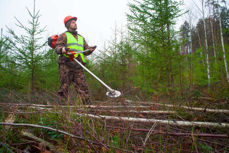 A forest worker takes care of a young forest. Real people work in forestry.