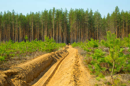 Fire-fighting strip in forest plantations. Forest fire protection. Forestry management.