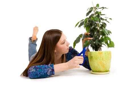 floriculturist: Woman cuttion plant with blue scissors