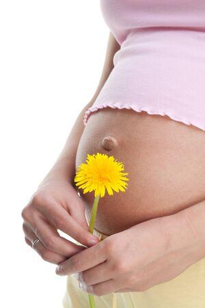 life giving birth: Celebraci�n de diente de Le�n amarillo y su vientre de la mujer embarazada  Foto de archivo