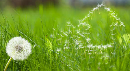 Flying dandelions seed form house pattern represent real estate dreams photo