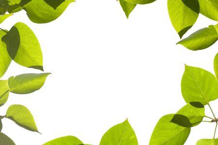 Green leaves border frame isolated on white
