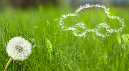 Flying dandelions seed in form of a car pattern on green grass background Stock Photo