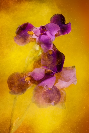 creates: Iris flowers and yellow color powder paint explosion that creates motion and expressive look