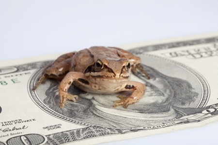Frog sitting on the dollar banknote depicting concept of greed in some cultures photo