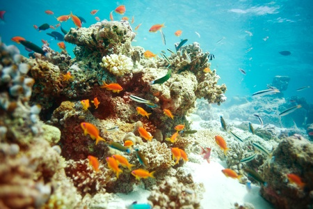 anthia: Busy life in lagoon with swimming fishes and corals Stock Photo
