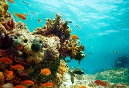 Laguna panorama con la escuela de peces y corales Foto de archivo