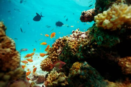 Underwater life of fishes living in corals Stock Photo - 11749519