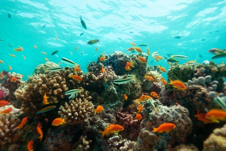 fish school: Close-up of corals and fishes on the reef barier