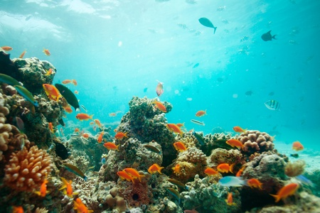 lagoon with corals full of fishes Stock Photo - 11749609