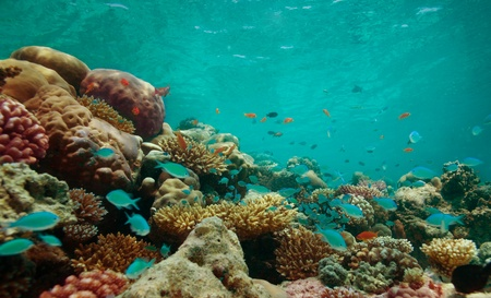 The reef with corals and blue fishes Stock Photo - 11750248