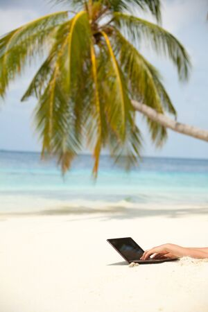 Beach background with palm and laptop with hands typing on in photo