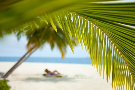Couple on the beach background shoot through beautiful palms branches Stock Photo - 11753629