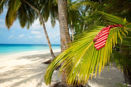 Red tie laying on the palm branch with the beach on the background Stock Photo - 11753858