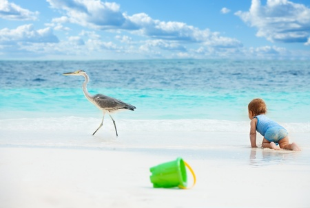 Smart baby crawling chasing the big bird on the beach with toys on foreground photo