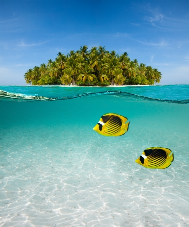 Half underwater shot of butterfly-fish on sand sea floor and palm island