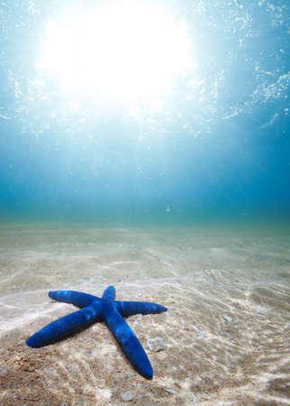 starfish underwater on the sand with sunlight photo