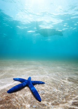 starfish  and turtle underwater on the sand with sunlight photo