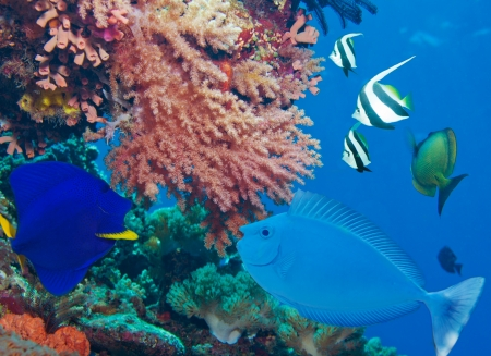 Colorful underwater world with fish and corals Stock Photo - 15673251